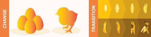 change vs transition